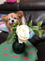 お花の定期便ですの画像(4枚目)