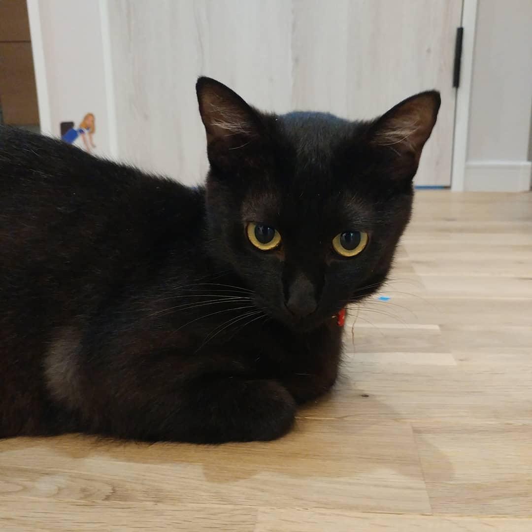 口コミ投稿:.黒猫のジジちゃんです。.出会いは我が家の外のゴミ箱をあさっていたのを主人が発見‼…