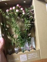 お花の定期便「 medelu 」お試しです♪の画像(2枚目)