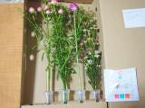 お花のある暮らし GreenSnapのお花定期便medelu♪の画像(2枚目)