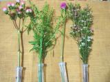 お花のある暮らし GreenSnapのお花定期便medelu♪の画像(6枚目)