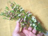 お花のある暮らし GreenSnapのお花定期便medelu♪の画像(10枚目)