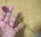 お花のある暮らし GreenSnapのお花定期便medelu♪の画像(7枚目)