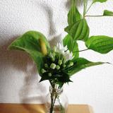 おうちにかわいいお花を飾りませんか?*medeluのお花定期便の画像(12枚目)