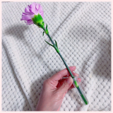 「medeluのお花の定期便で彩りのある毎日を」の画像(3枚目)