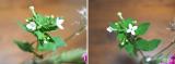 「☆ GreenSnapさん medeluのお花定期便 ANYROOMコースをお試し!日々の生活にお花を♪」の画像(17枚目)