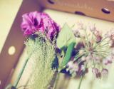「☆ GreenSnapさん medeluのお花定期便 ANYROOMコースをお試し!日々の生活にお花を♪」の画像(7枚目)