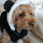 寒すぎて全然散歩行きたがらない犬🤣私も一緒に冬眠😪マスクで肌荒れ💦乾燥も気になるー😭#プラソニエ #アクア毛穴クリーン #美顔器 #毛穴 #スキンケア #乾燥 #monipla #pour…のInstagram画像