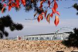 冬に咲くヒマラヤ桜の画像(7枚目)