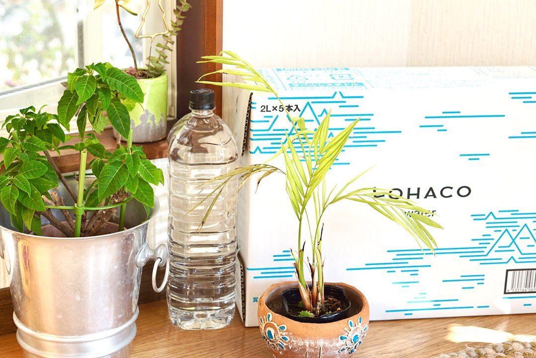 口コミ投稿:...【LOHACO限定】LOHACO Water 2L     ラベルレス 1箱(5本入)硬度19mg/Lと超…