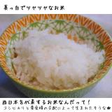 カネ吉 ヒノヒカリの画像(2枚目)