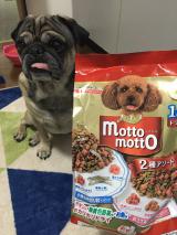 口コミ記事「プッチーヌmottomotto☆もっともっと愛犬喜ぶドッグフード」の画像