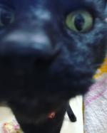 クーちゃんどーーん‼️‼️‼️10歳すぎのオスの黒猫クーちゃんはまだまだ元気です\(♡*∀*♡)/いつも姉弟の世話してくれてありがとう♥#地球洗い隊 #とれるNO1 #ペットケ…のInstagram画像