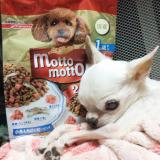 口コミ記事「食欲旺盛なワンちゃんに!国産のおいしいギュッカリフードmottomotto☆」の画像