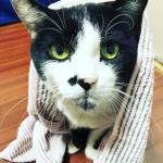 株式会社アルファックス様の竹炭抗菌ヘアドライタオルSuitowelをお試し致しました😻✨✨猫ちゃんやワンちゃんのお風呂の後の毛を乾かすのは大変では無いですか⁉️猫ちゃんはドライヤー嫌いでい…のInstagram画像