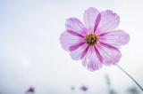 家の中の花粉を除去!洗えない布製品におすすめの花粉対策グッズとは?の画像(6枚目)