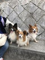 桜咲き始めました♡の画像(4枚目)