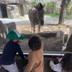 動物園、続き。ボーイ&girlはいつの間にか、シマウマ見に行ってた💦自分にお弁当、息子さんに可愛いラトル(ニギニギ)を。姪っ子がりんりん鳴らしてあやしてくれて。息子は姪っ子が大きな嬉しい声を出…のInstagram画像