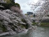 【先週の千鳥ヶ淵の桜  お花見2021 】の画像(3枚目)