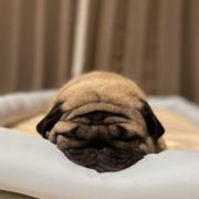 「愛犬大好き」【SNS投稿】鹿肉ドッグフード試食モニター 1~10歳のワンちゃん30名様大募集!の投稿画像