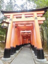 「お花見2021@京都」の画像(2枚目)