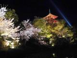 「お花見2021@京都」の画像(5枚目)