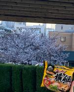 皆さん、今年はお花見はいきましたか?今年は桜の開花時期が早かったですよね〜お弁当を持っていって、桜の木の下で食べるのが主流だと思いますが、ちょっと気分を変えて、ラーメンはいかがでしょう?…のInstagram画像