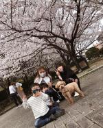 🌸今年は公園三昧やったけ桜いっぱい☺️子供たちからまた桜ー?っちいわれるくらい桜みにいった🌸笑笑コロナめ🤬って思うけど色々考えさせられるところも逆によかったこともあ…のInstagram画像