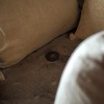 ・【閲覧注意!?ダニ目視キット】・・※ダニの画像があるので閲覧注意です・有限会社ティシビィジャパン(日革研究所グループ)が出している、ダニ目視キットを使…のInstagram画像