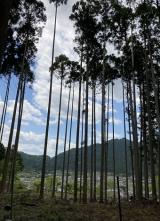 「北山コース再び~大原の里へ」の画像(13枚目)