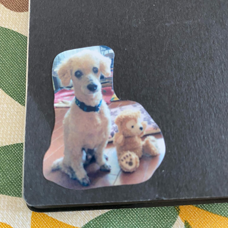 口コミ投稿:手帳に貼って、仕事中に和む☺️家族にもお裾分け、動物病院のボードにも貼らせてもら…