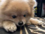 愛犬の筋トレわんわん♬の画像(8枚目)