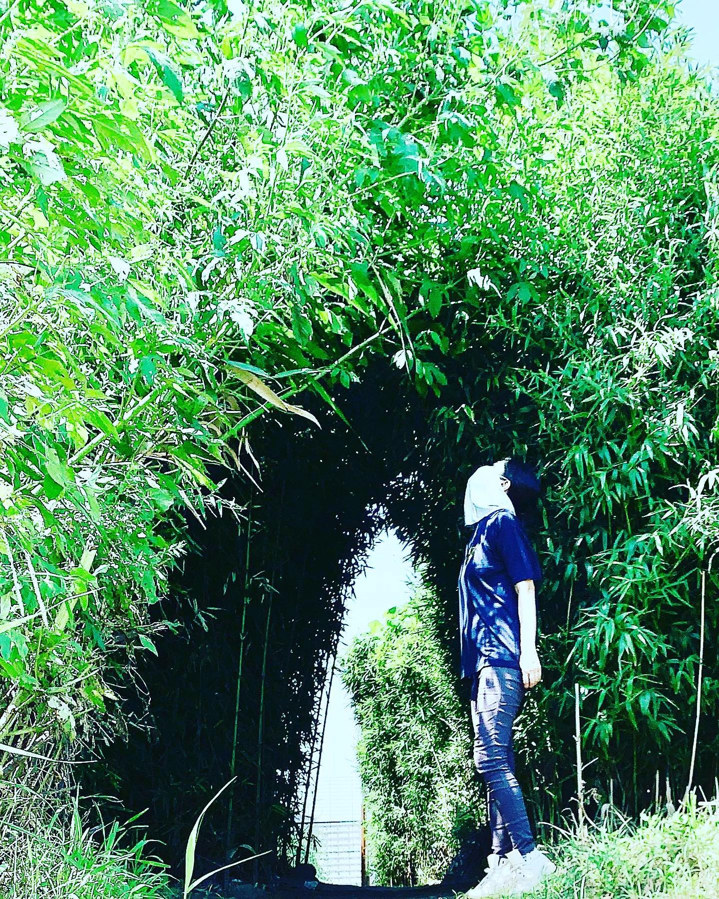 口コミ投稿:土曜日の野球の付き添いは暑かった😵謎な竹藪のトンネルでひと休憩🎋.そんな暑い日に助…