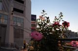 横須賀 お楽しみBOX 株式会社八天堂の画像(1枚目)