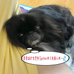 ♪2021/10/10♪昨日に続きまして〜🤣✌️♪立て続けに… #モニプラ のモニターに当選しまして〜🎶♪今日は #マルサン さんの #だし香る鮮度みそ 💕♪いやぁ〜世の中…のInstagram画像