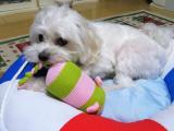 太郎のおもちゃの画像(3枚目)