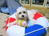 太郎のおもちゃの画像(2枚目)