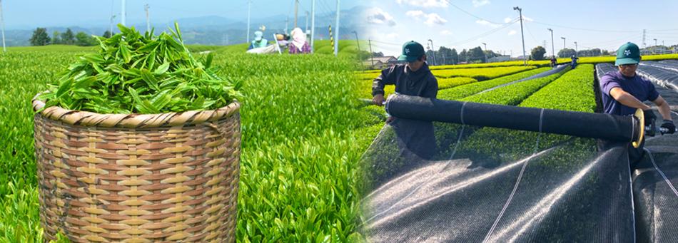 株式会社荒畑園のファンサイト「お茶の荒畑園」