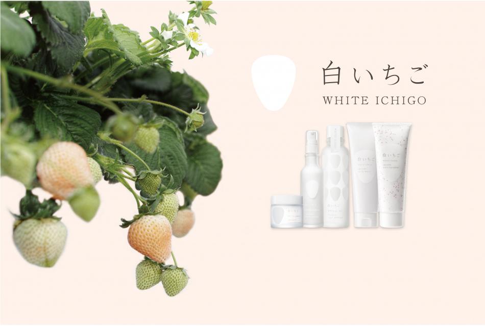 WHITE ICHIGO(ホワイトイチゴ)のヘッダー画像