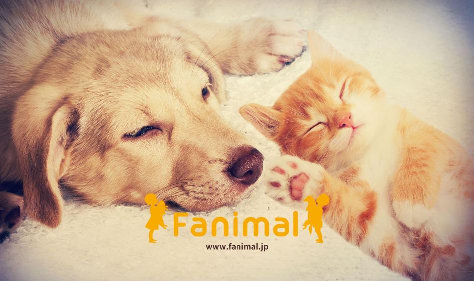 株式会社Fanimalのファンサイト「Fanimalファンサイト」