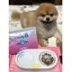 イベント「\愛犬の口臭ケアモニター募集/愛犬の写真や動画が商品PRに⁉ラブリービー【20名様】」の画像