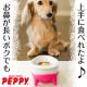 イベント「ペット用品通販ペピイ 鼻が長い小型犬やたれ耳の子にも♪『ワンコプレート』10名様」の画像