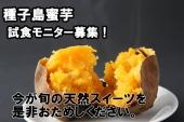 今が旬!「種子島蜜芋」試食モニター大募集!!