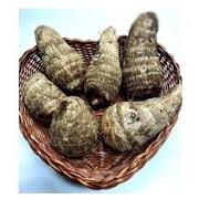 「三宅島産のおいしい赤芽芋(約500g) を20名様にモニタープレゼント!」の画像、「東京愛らんど」のモニター・サンプル企画