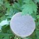 イベント「手摘みのヨモギ&地蜜(ハチミツ)でつくる手作り『よもぎとハチミツ石けん』モニター」の画像