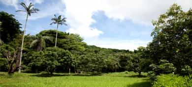大自然のチカラ・ワイルドコスメティクス【satamisaki organics】