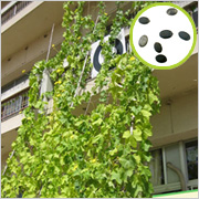 株式会社ネオナチュラルの取り扱い商品「ヘチマ倶楽部会員募集!壁面緑化の輪を広げよう 300名様に種無料プレゼント♪」の画像