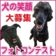 イベント「【ワンちゃんのプラチナム笑顔ください♪】愛犬フォトコンテスト第2弾!」の画像