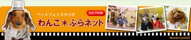 ペットフォトスタジオ わんこ*ぷらネット