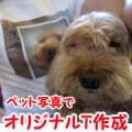 「かわいいペット写真」でオリジナルTシャツつくっちゃいます!【20名様】/モニター・サンプル企画